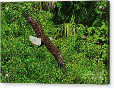 Acrylic Print featuring the photograph Eagle Series Flight by Deborah Benoit