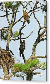 Eagle Series Mom And Me Acrylic Print by Deborah Benoit
