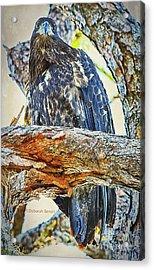 Eagle Series Tree Baby Acrylic Print by Deborah Benoit