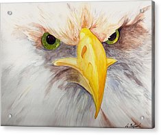 Eagle Stare Acrylic Print by Eric Belford