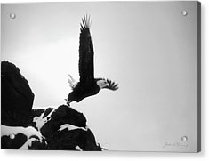 Eagle Takeoff At Adak, Alaska Acrylic Print by John A Rodriguez