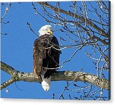 Eagle Watch Acrylic Print by Sue Stefanowicz