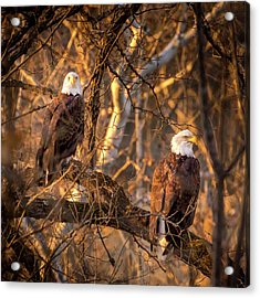 Eagles Acrylic Print