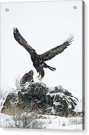 Eagles In The Storm Acrylic Print by Mike Dawson