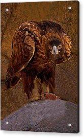 Eagle's Stare Acrylic Print
