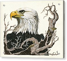 Eagle's View - Wildlife Painting Acrylic Print by Linda Apple