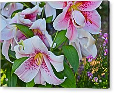 Early August Tumble Of Lilies Acrylic Print by Janis Nussbaum Senungetuk