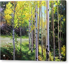 Early Autumn Aspen Acrylic Print