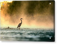 Early Bird Acrylic Print