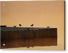 Early Birds Acrylic Print