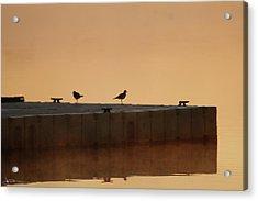 Early Birds Acrylic Print