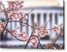 Early Bloom Acrylic Print