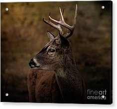 Acrylic Print featuring the photograph Early Buck by Robert Frederick