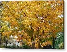 Early Fall Acrylic Print by Gregory Smith