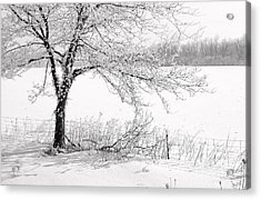 Early Frost Acrylic Print