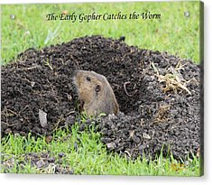 Early Gopher Catches The Worm Acrylic Print