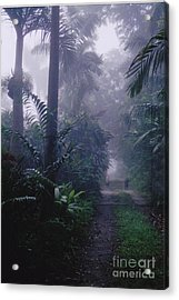 Early In The Garden Acrylic Print by Colette Raker