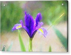 Early Iris Acrylic Print