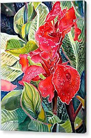 Early Morning Cannas  Acrylic Print by Therese AbouNader