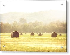 Early Morning Dew  Acrylic Print by Tamyra Ayles