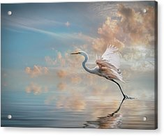 Early Morning Egret Acrylic Print by Brian Tarr