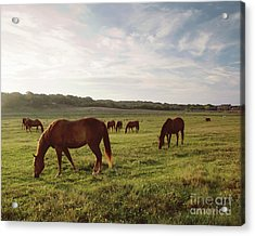 Early Morning Graze Acrylic Print by A New Focus Photography