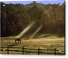 Acrylic Print featuring the photograph Early Morning Grazing by Diane Merkle