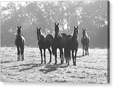 Early Morning Horses Acrylic Print by Hazy Apple