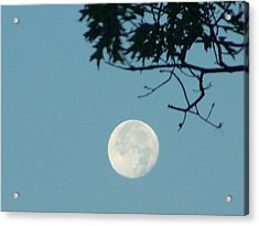 Early Morning Moon Acrylic Print