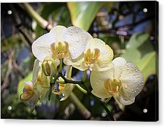 Early Morning Orchids Acrylic Print
