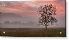 Early Morning Promises Acrylic Print
