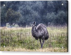 Early Morning Stroll Acrylic Print by Douglas Barnard