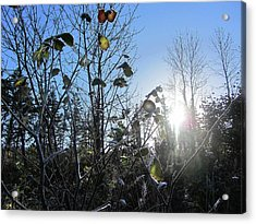 Early Morning Sun Acrylic Print