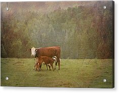 Early Morning Breakfast-cow Style Acrylic Print