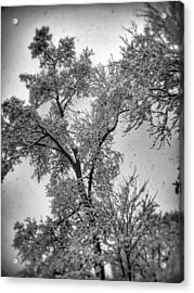 Acrylic Print featuring the photograph Early Snow by Steven Huszar