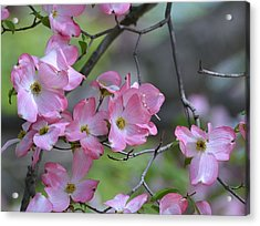Early Spring Color Acrylic Print