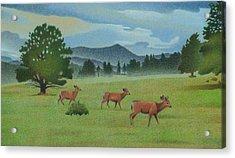 Early Spring Evergreen Acrylic Print