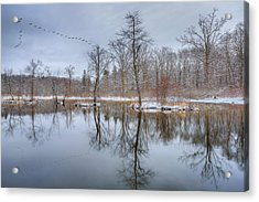 Early Spring In New England Acrylic Print by Bill Wakeley