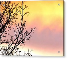 Acrylic Print featuring the photograph Early Spring Sunset by Will Borden