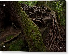 Earth Day 2012 Acrylic Print by Maria Suhr
