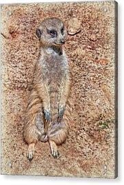 Acrylic Print featuring the photograph Earth Manikin by Hanny Heim