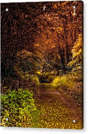 Earth Tones In A Illinois Woods Acrylic Print by Thomas Woolworth