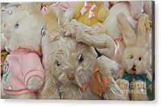Acrylic Print featuring the photograph Easter Bunnies by Benanne Stiens