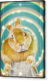 Easter Bunny Acrylic Print by LeeAnn McLaneGoetz McLaneGoetzStudioLLCcom