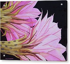 Easter Lily Cactus Flower Acrylic Print by Carol Sabo