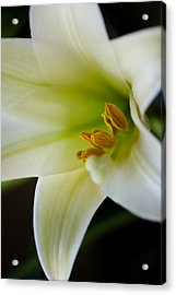Easter Lily Color Acrylic Print by Edward Myers