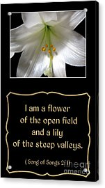 Acrylic Print featuring the photograph Easter Lily With Song Of Songs Quote by Rose Santuci-Sofranko