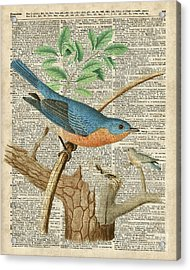 Eastern Blue Birds Acrylic Print