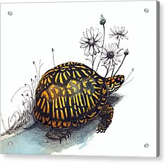 Eastern Box Turtle Acrylic Print