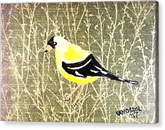 Eastern Goldfinch Acrylic Print